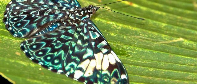butterflies and moths and other crawlies